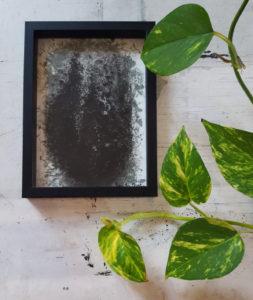 «Cyprès» ~ Dessin ~ Encre Acrylique & Encre de Chine ~ encadré 13x18cm
