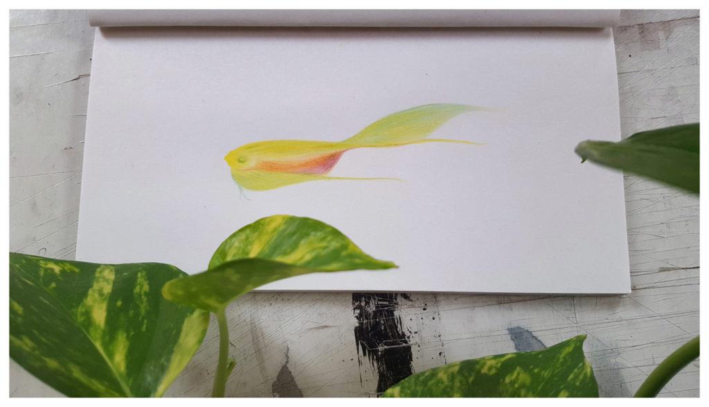 Poisson crayon ©PeggyAnnMourot